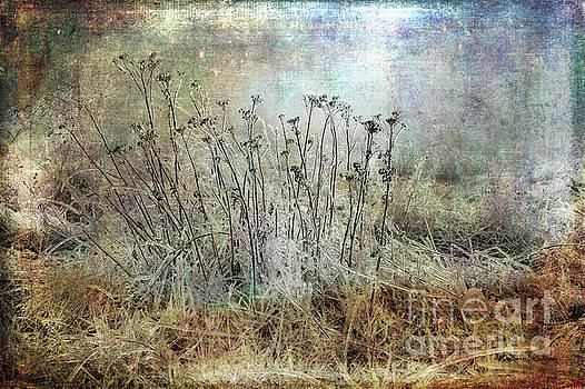 Cold Flowers by Randi Grace Nilsberg