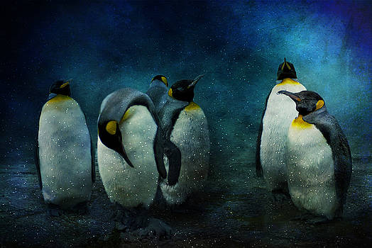 Cold Penguins by Audran Gosling