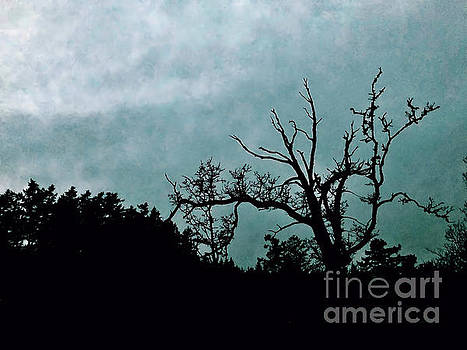 Cold Shadows by Victor K