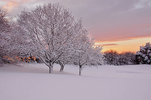 Cold Trees by Phil Child