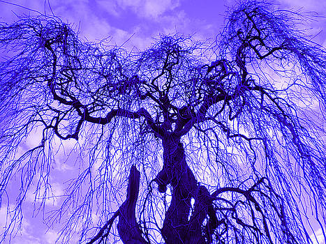 Cold weeping tree by Jennifer Conroy