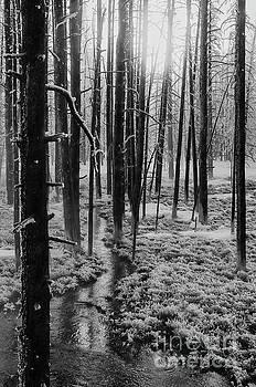 Bob Phillips - Cold Winter Morning 2