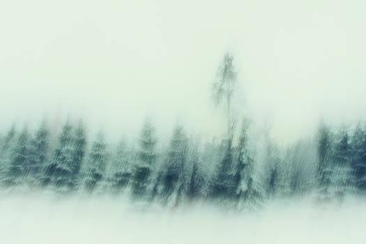 Cold Winter Woods by Dorit Fuhg