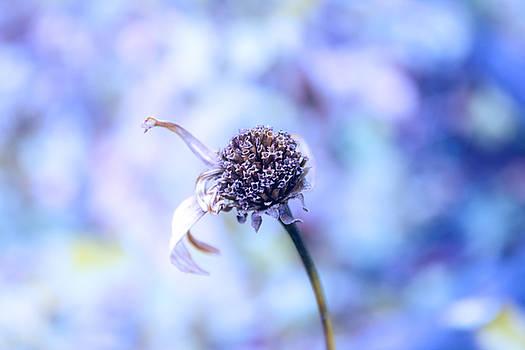 Coldness by Cindy Grundsten