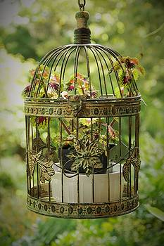 Allen Nice-Webb - Coleus in Vintage Birdcage