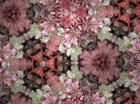 Coleus Patterns by Sylvan Adams