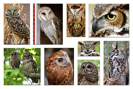 Jill Lang - Collage of Owls