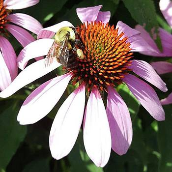 Collecting By Tammy Finnegan #bee by Tammy Finnegan