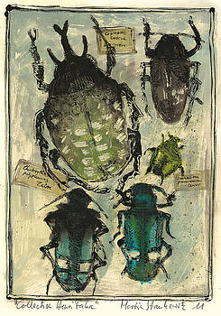Martin Stankewitz - collection of beetles,entomologic still life