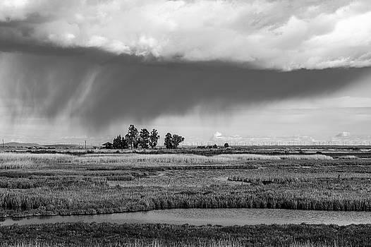 Bruce Bottomley - Colledia rainstorm B/W