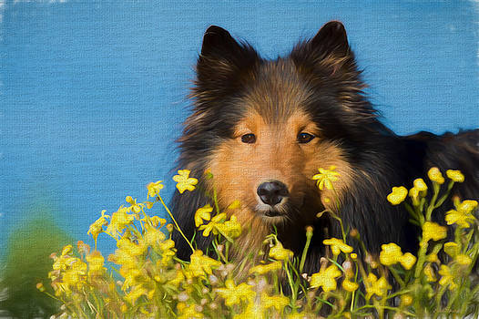 Collie in a Field of Flowers - Painting by Ericamaxine Price