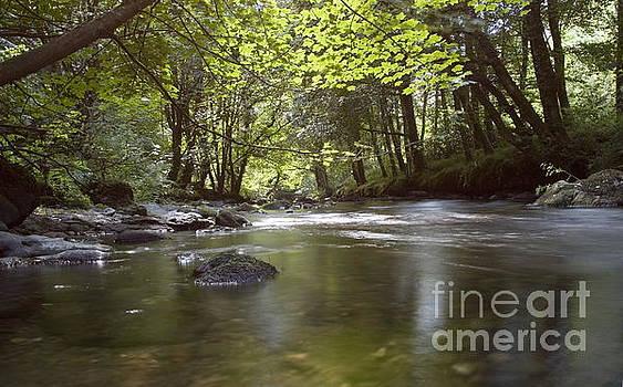 Marc Daly - Colligan River 2