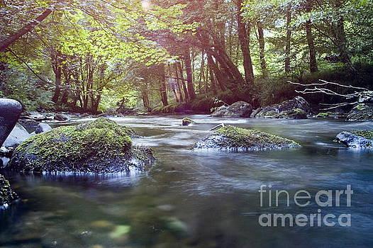 Marc Daly - Colligan River Dream 1
