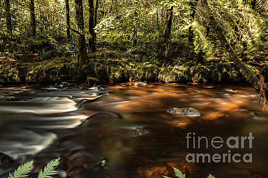 Marc Daly - Colligan River Flow