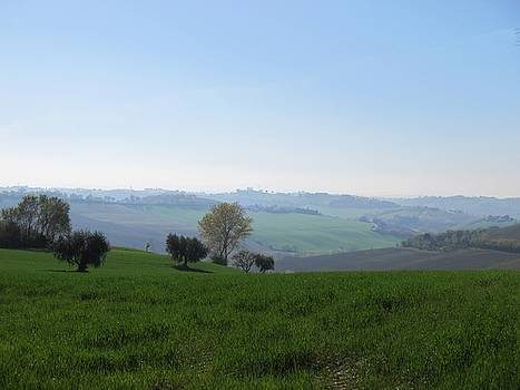 Colline marchigiane - 4 by Alberto V  Donati