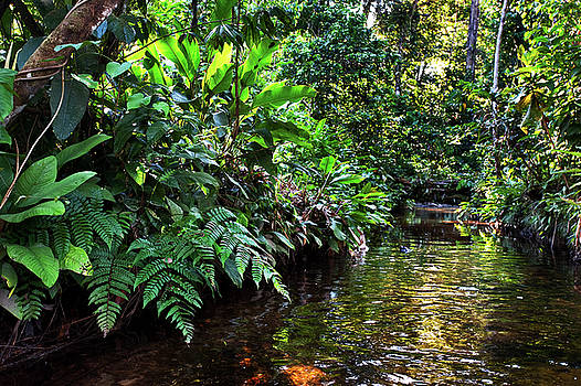 Colombian amazon by Eric Bauer
