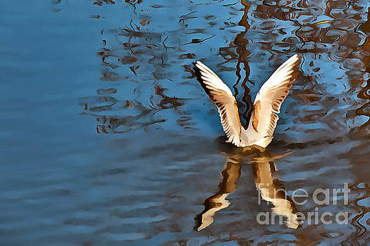 Color Abstract gull wings by Odon Czintos