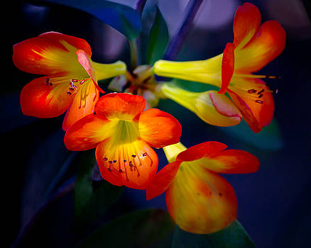 Color Burst by Mark Andrew Thomas