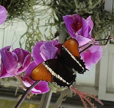 Color Clash of Pink Flower Orange Black Butterfly by Mozelle Beigel Martin