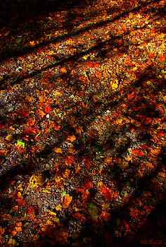 Color Curtain by Ed Smith
