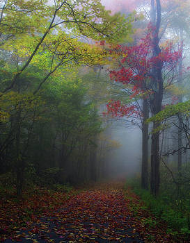 Color In The Mist by Johnny Crisp