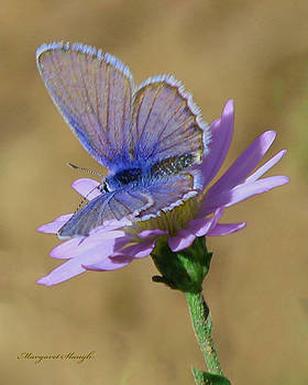 Color Me Blue by Margaret  Slaugh
