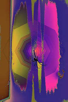 Color Of A Spiders Web by Kenneth James