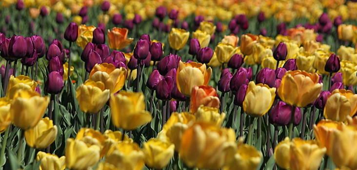 Rosanne Jordan - Color of Spring
