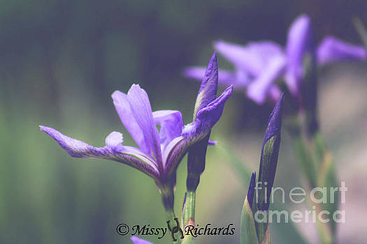 Color On My Pond by Missy Richards