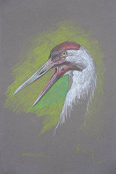 Color pencil painting - Egret #1845 by Hongtao Huang