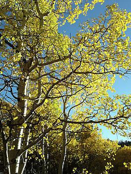 Colorado 2016 by Tammy Sutherland