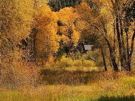 Colorado Color by Charlotte Schafer