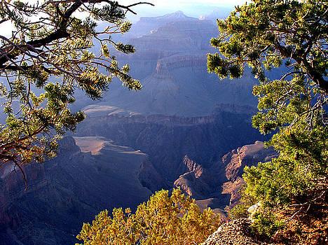 Colorado Canyon Trees by Pilar  Martinez-Byrne
