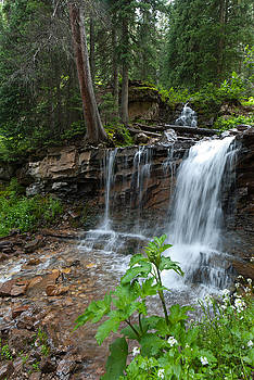 Colorado Cascading Stream and Waterfall by Cascade Colors