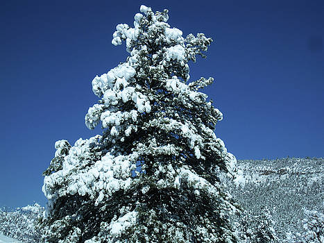 Colorado Cold by Tammy Sutherland