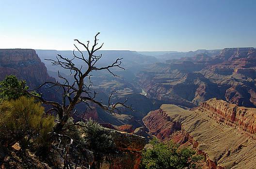 Colorado by Dejan Dizdar