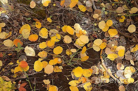 Jerry McElroy - Colorado Fall