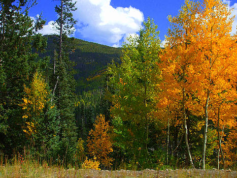 Colorado Fall Woods by Allison Jones