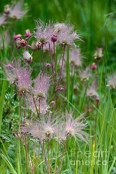 Colorado Flowers by CJ Benson