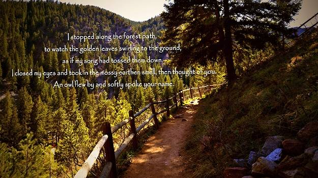 Marysue Ryan - colorado forest path