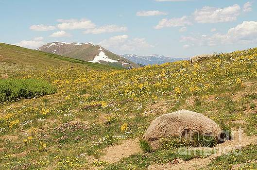 Colorado Independence Pass by Christine Belt