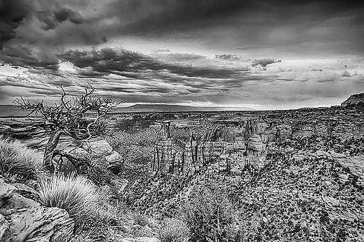 Colorado National Monument in Black and White by James BO Insogna