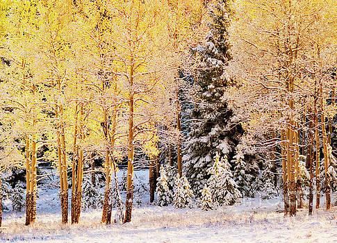 Colorado Snow in Autumn by Beth Riser