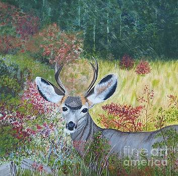 Colorado White Tail Deer by Alicia Fowler