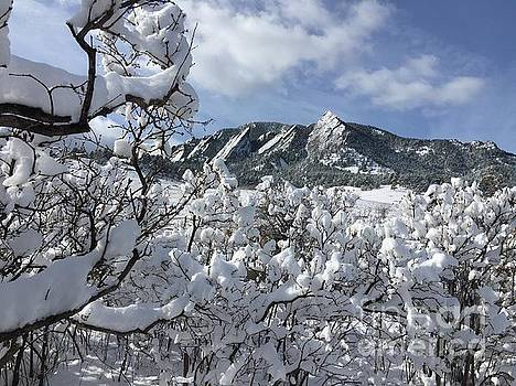 Colorado winter beauty  by R Mahlouji