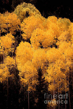 Colorado's Best by The Forests Edge Photography - Diane Sandoval