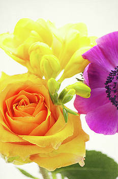 Angela Doelling AD DESIGN Photo and PhotoArt - Colored Flowers