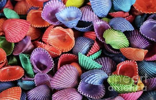 Paulette Thomas - Colored Sea Shells