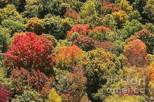 Bob Phillips - Colored Tree Tops