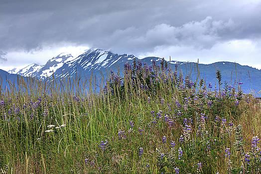Gloria Anderson - Colorful Alaska field